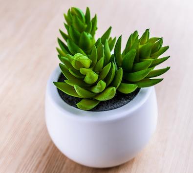 vaso de flores de plástico