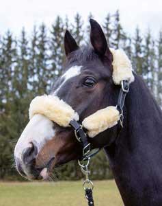 Melhor cabeçada de cavalo 2021: guia de classificação e compra