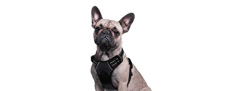 best dachshund harness 2021 ranking e guia de compra